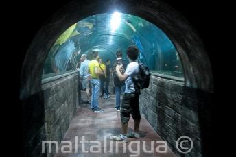 Malta nationaal aquarium